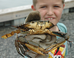 Photo: Boy holding a crab.